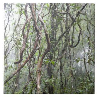 vid y ramas torcidas en selva tropical azulejos