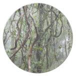 vid y ramas torcidas en selva tropical plato de comida