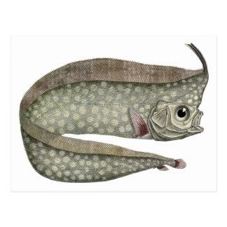 Vida acuática marina del vintage, Oarfish con Postales