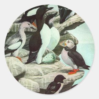 Vida animal marina del vintage, frailecillos de pegatina redonda
