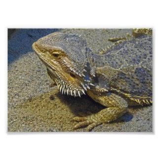 Vida bajo fuego - dragón barbudo fotografia