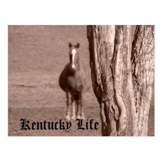 Vida de Kentucky Postales