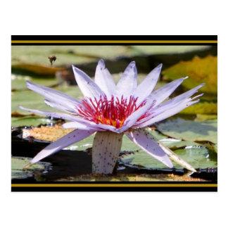 Vida de la planta acuática tarjeta postal