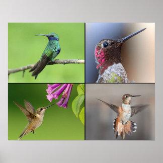 Vida de los colibríes del poster