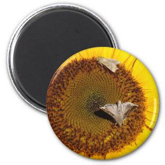 Vida de un girasol imán redondo 5 cm