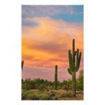 Vida del desierto del Saguaro Papelería Personalizada