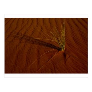Vida del desierto tarjeta postal