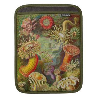 Vida del océano de Actinae de Ernst Haeckel Fundas Para iPads