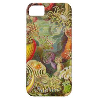 Vida del océano de Actinae de Ernst Haeckel iPhone 5 Carcasa