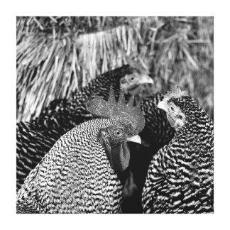 Vida del país - lona del gallo y de la impresión lona envuelta para galerias
