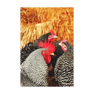 Vida del país - lona del gallo y de la impresión lona estirada galerías