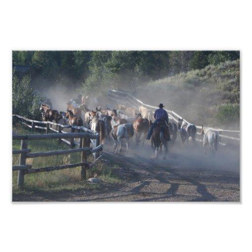 Vida del rancho de los caballos de los vaqueros cojinete