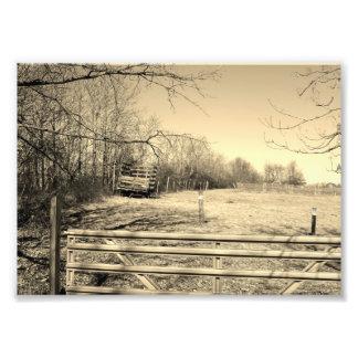 Vida en el campo 7x5 Prin fotográfico blanco y Fotografía