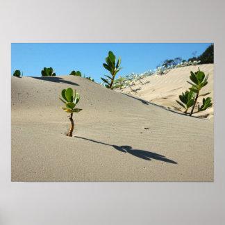 Vida en el desierto póster