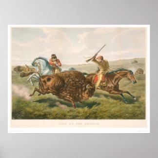 Vida en la pradera: La caza del búfalo (0878A) Póster