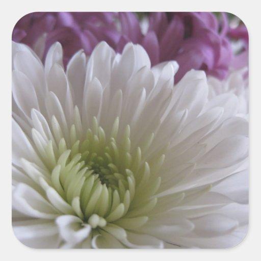 Vida en pegatinas de la floración (1)