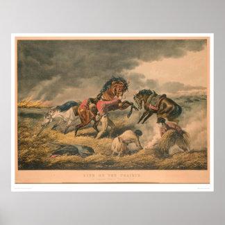 Vida en pradera: La defensa del trampero (0879A) Póster