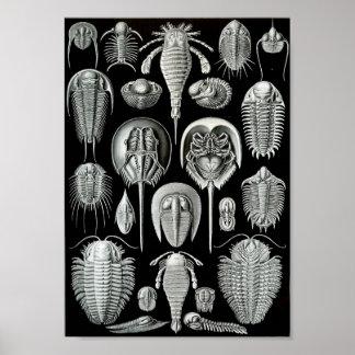 """Vida marina 11"""" del arte de Ernst Haeckel x 8,5 Poster"""