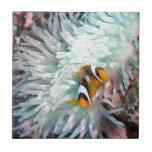 Vida marina azulejos ceramicos