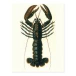 Vida marina crustácea, langosta del océano del vin tarjeta postal