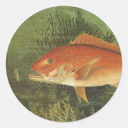 Vida marina del vintage, pescado del pargo rojo en pegatina redonda