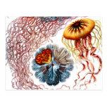 Vida marina del vintage tarjetas postales