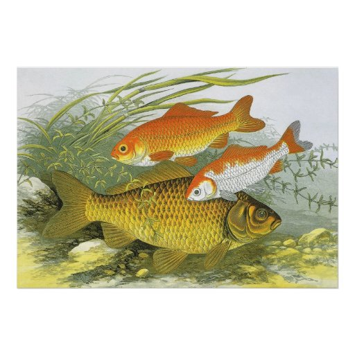 Vida marina marina del vintage, Goldfish acuático  Poster