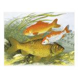 Vida marina marina del vintage, Goldfish acuático Postal