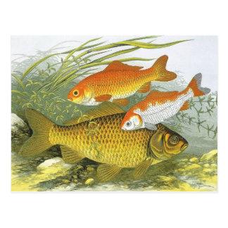 Vida marina marina del vintage, Goldfish acuático  Tarjeta Postal