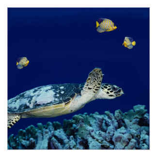 Vida marina - tortuga de mar impresiones