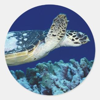 Vida marina - tortuga de mar etiquetas redondas