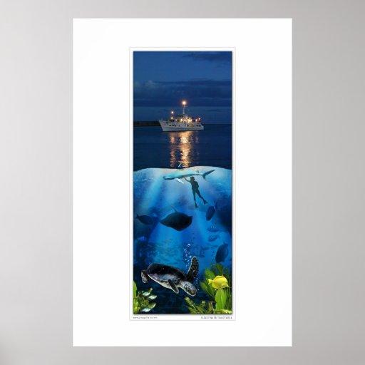 Vida por encima y por debajo del mar poster