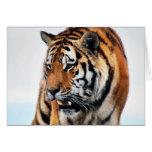 Vida salvaje de los tigres felicitaciones