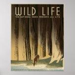Vida salvaje los parques nacionales preservan toda posters
