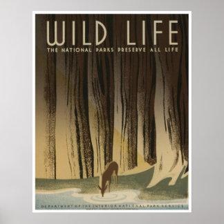 Vida salvaje: Servicio de parques nacionales Póster