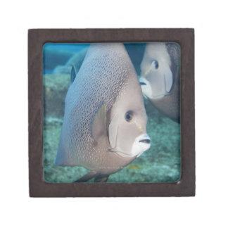 Vida subacuática PESCADO un par de Angelfish gr Caja De Joyas De Calidad