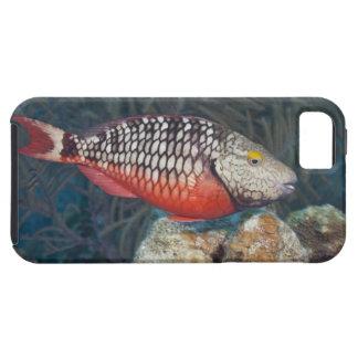 Vida subacuática, PESCADO: una luz de parada color iPhone 5 Case-Mate Coberturas