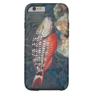 Vida subacuática, PESCADO: una luz de parada Funda De iPhone 6 Tough