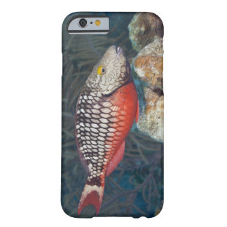 Vida subacuática, PESCADO: una luz de parada Funda De iPhone 6 Barely There