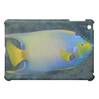 Vida subacuática; PESCADOS: Angelfish de la reina