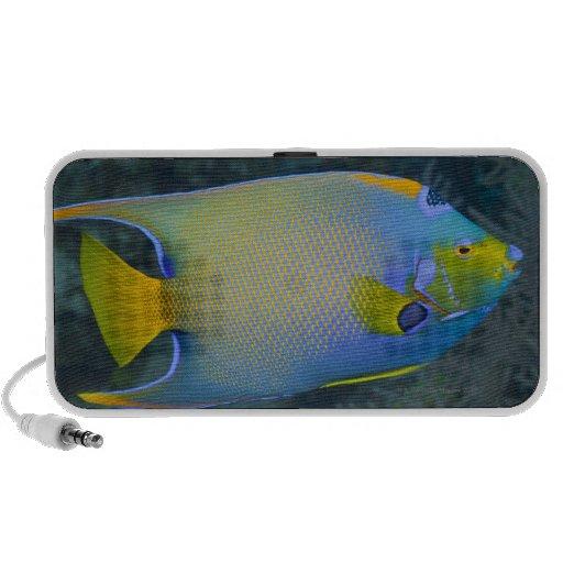 Vida subacuática; PESCADOS:  Angelfish de la reina Mp3 Altavoz