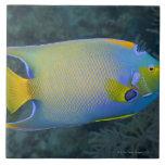Vida subacuática; PESCADOS:  Angelfish de la reina Azulejos Cerámicos