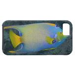 Vida subacuática; PESCADOS:  Angelfish de la reina iPhone 5 Case-Mate Fundas