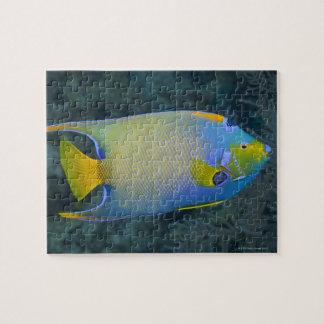 Vida subacuática; PESCADOS:  Angelfish de la reina Rompecabezas