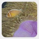Vida subacuática; PESCADOS: Clownfish (rosa Calcomanías Cuadradas Personalizadas