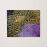 Vida subacuática; PESCADOS: Clownfish (rosa Puzzles