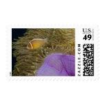 Vida subacuática; PESCADOS: Clownfish (rosa Franqueo