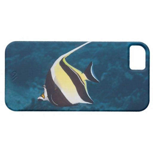 Vida subacuática; PESCADOS: Un ídolo del Moorish ( iPhone 5 Carcasas