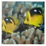 Vida subacuática; PESCADOS:  Un par de Fourspot Azulejo Cuadrado Grande