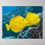 Vida subacuática; PESCADOS: Un par de sabores amar Impresiones